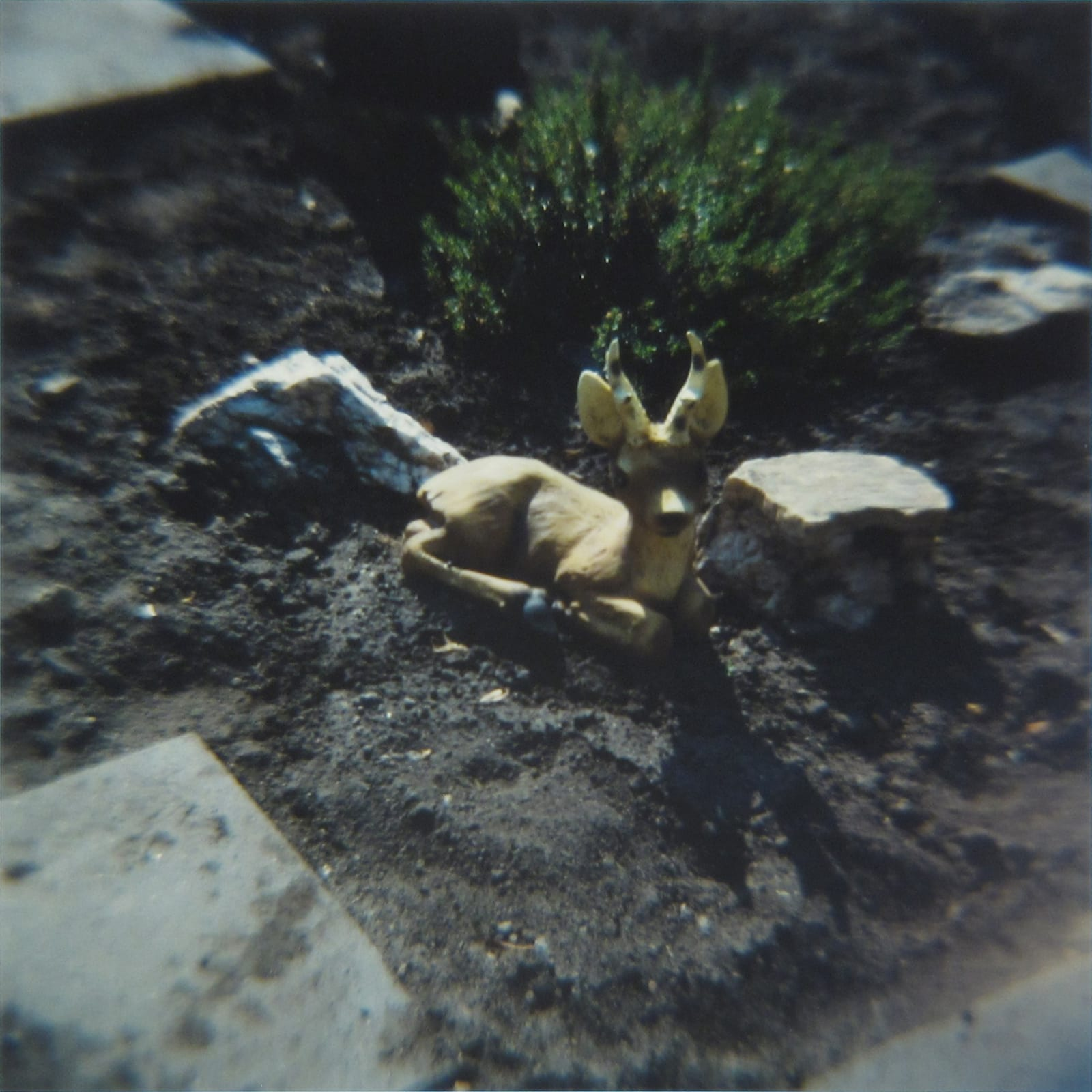 Amy Blakemore Deer in Garden, 2018 chromogenic print 15 x 15 in (38.1 x 38.1 cm) ABL 253 $3,000