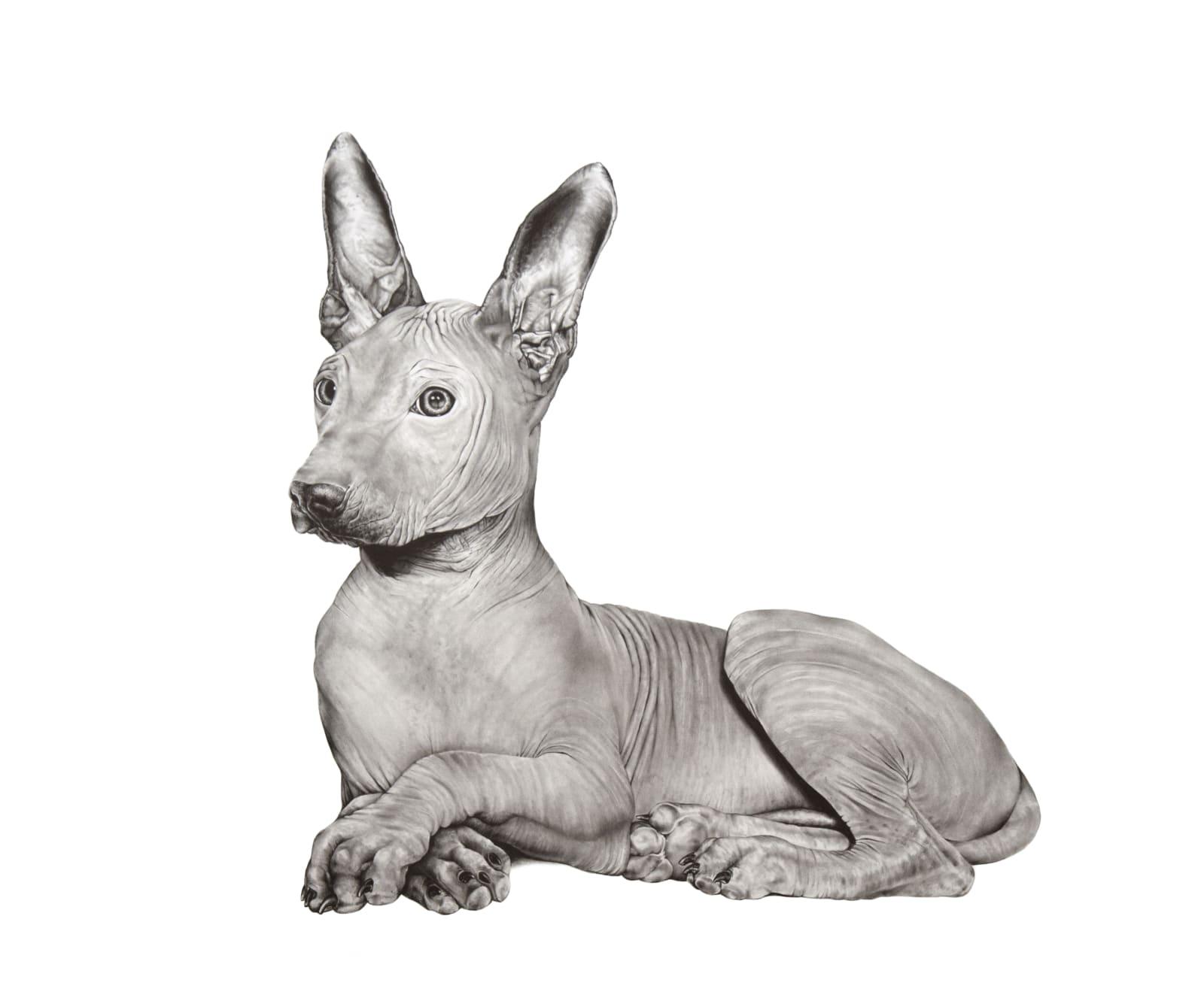 Debra Barrera, Xolo / Actualization for Puppies, 2019 graphite on paper, 22 x 27 in