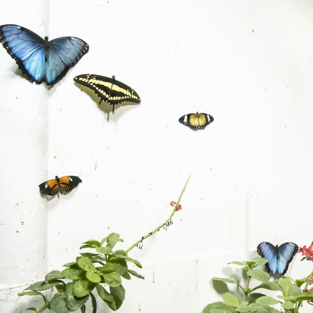 Cig Harvey, Five Butterflies, Rockport, Maine, 2015 14 x 14 inch chromogenic dye coupler print Edition of 10 28 x 28 inch chromogenic dye coupler print Edition of 7 40 x 40 inch chromogenic dye coupler print Edition of 5