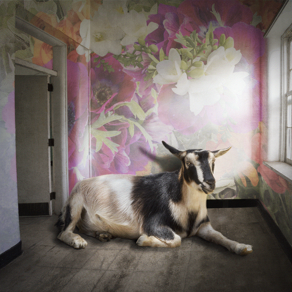 Carol Erb. Mrs. Goat, 2021. Photograph on Canson Edition. Multiple editions.