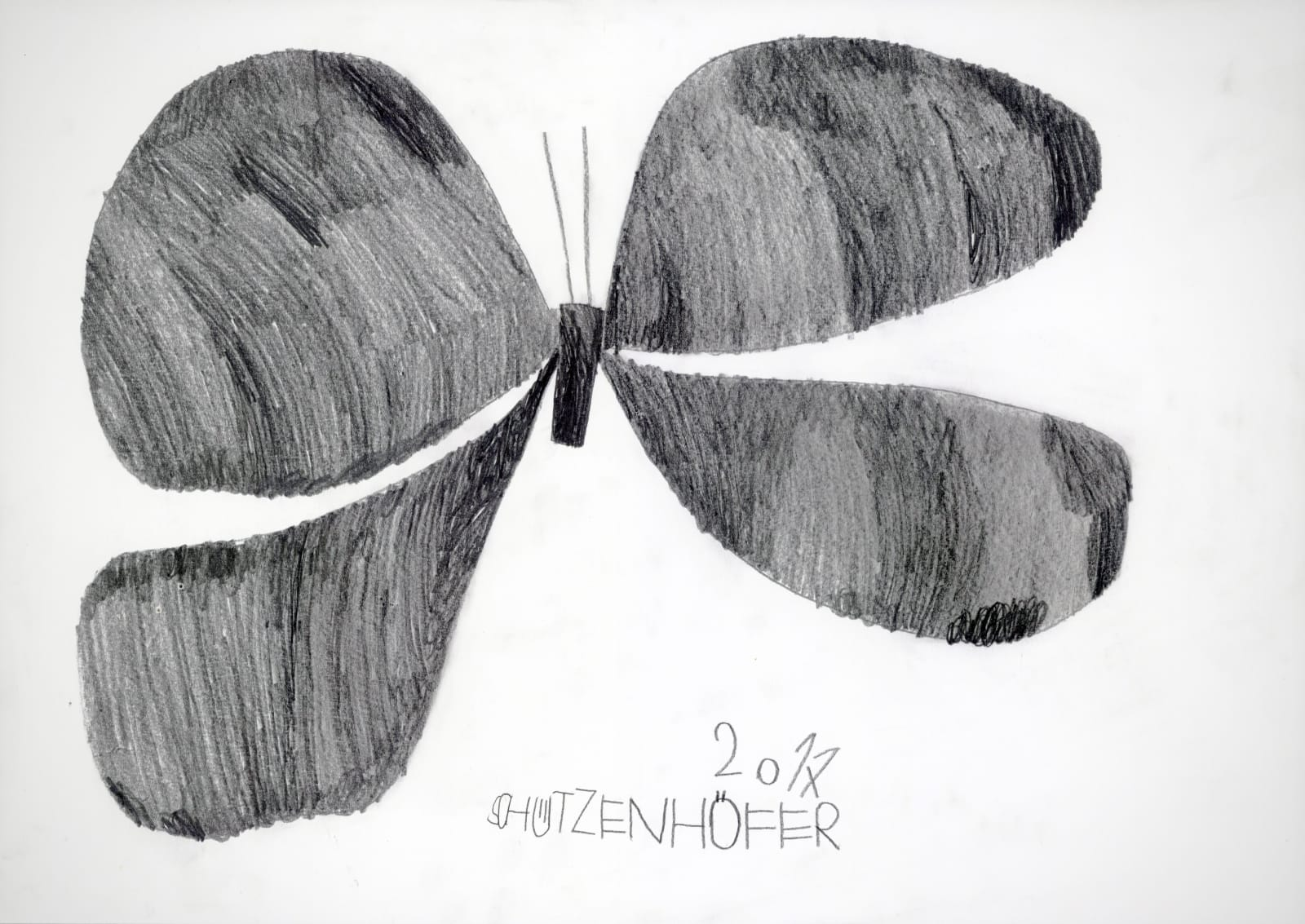 Butterfly, 2017 Graphite on paper 16.5 x 23.4 in. (42 x 59.5 cm.) (GSG 110) $6,500