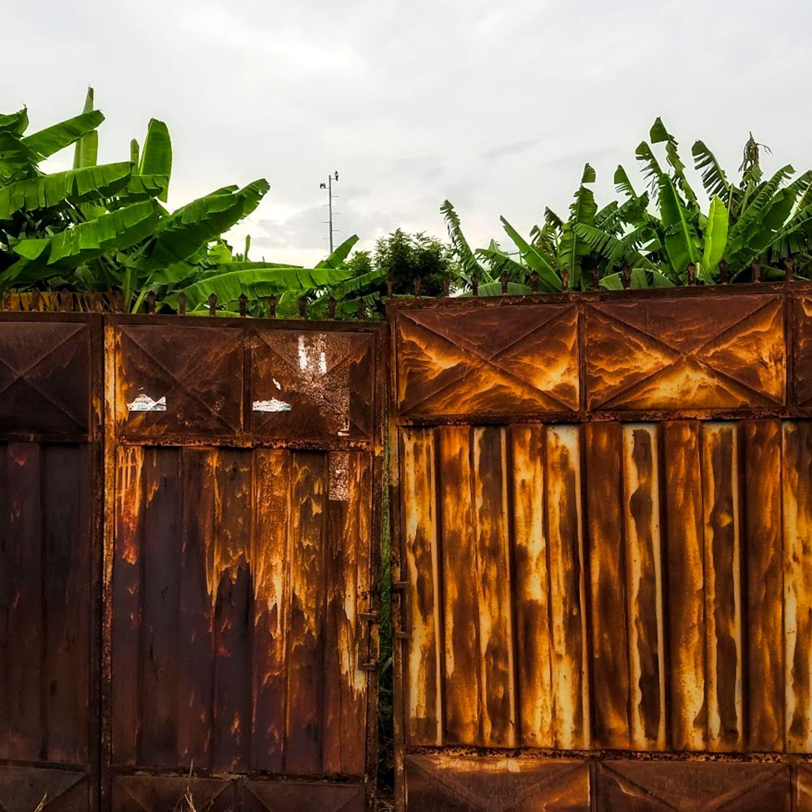 Hamzah Moshood Welcome to verdancy 42 x 42 cm 29.7 x 29.7 cm Digital print