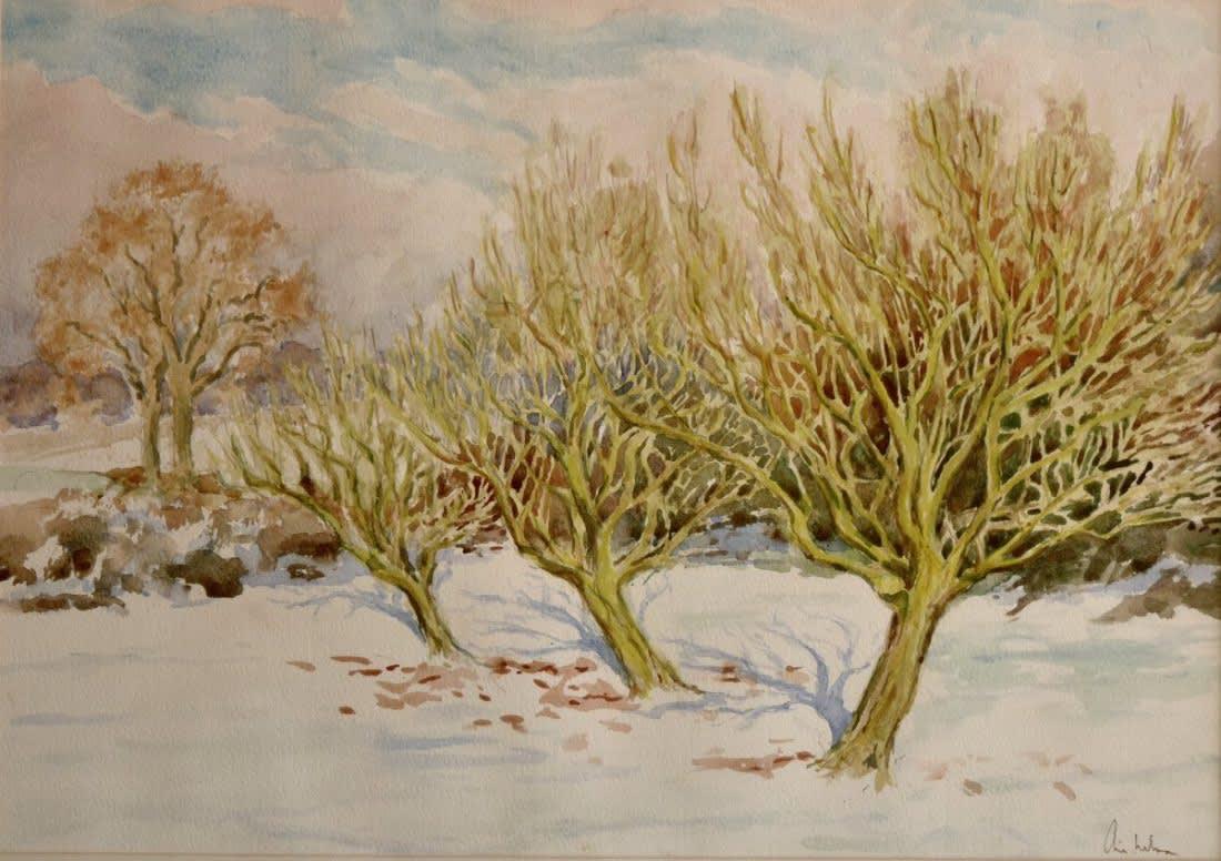 123 The orchard, January sun
