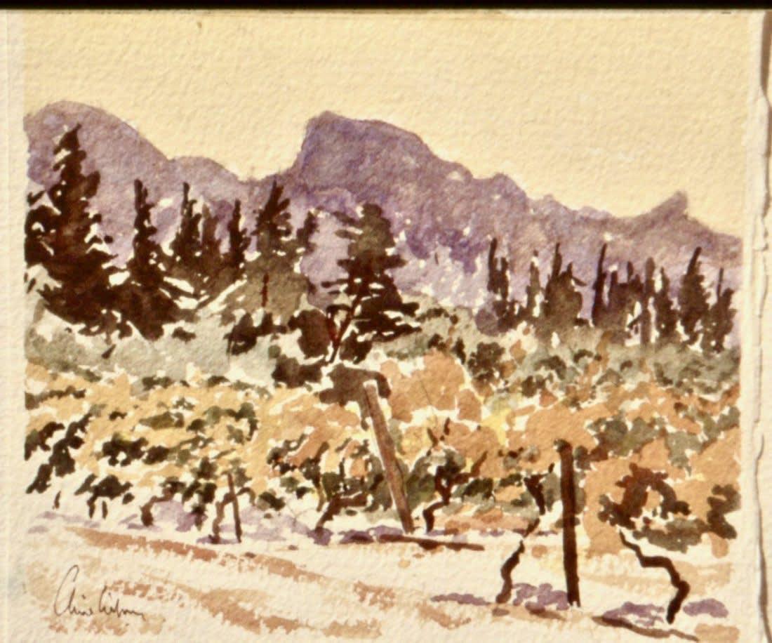148 Alpilles - vineyards I