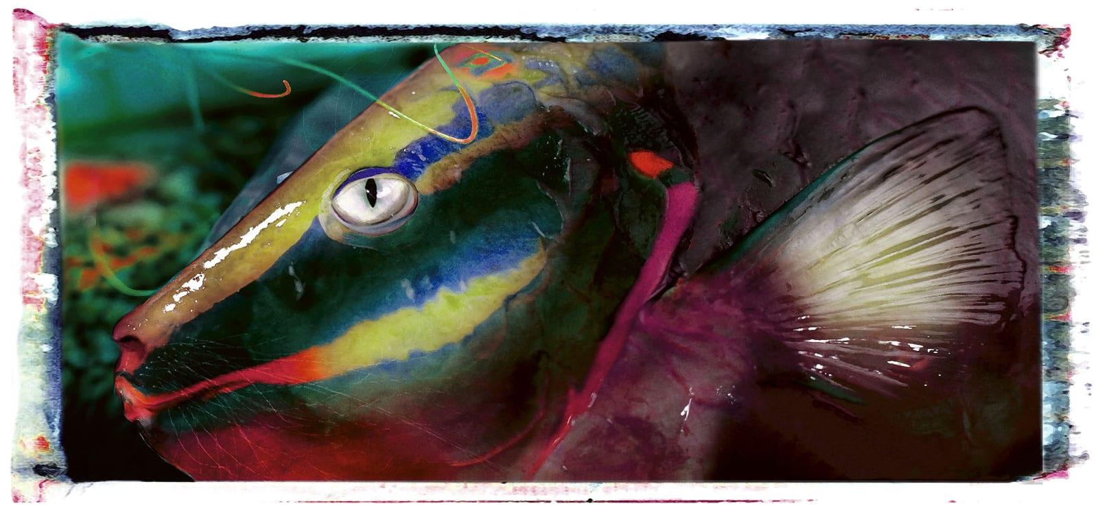 Alain Lacki, Catfish, 2008