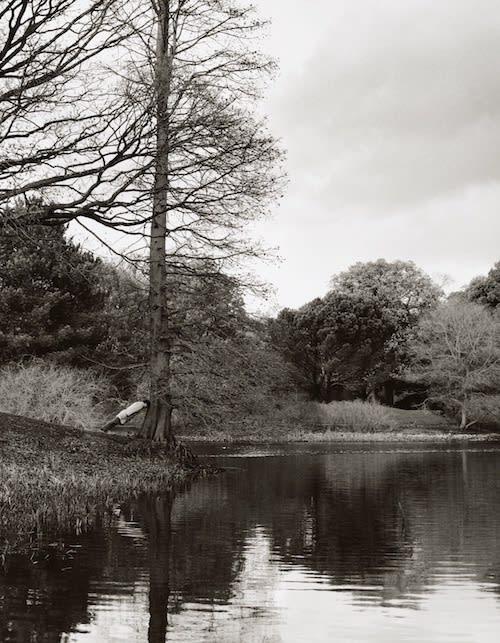 Stephane GRAFF (b.1965) Tree Intervention II, 2009 C-Type Photograph, Edition of 5 (Plus 2 artist's proofs) 35 ½ x 27 ½ inches / 90 x 70 cm