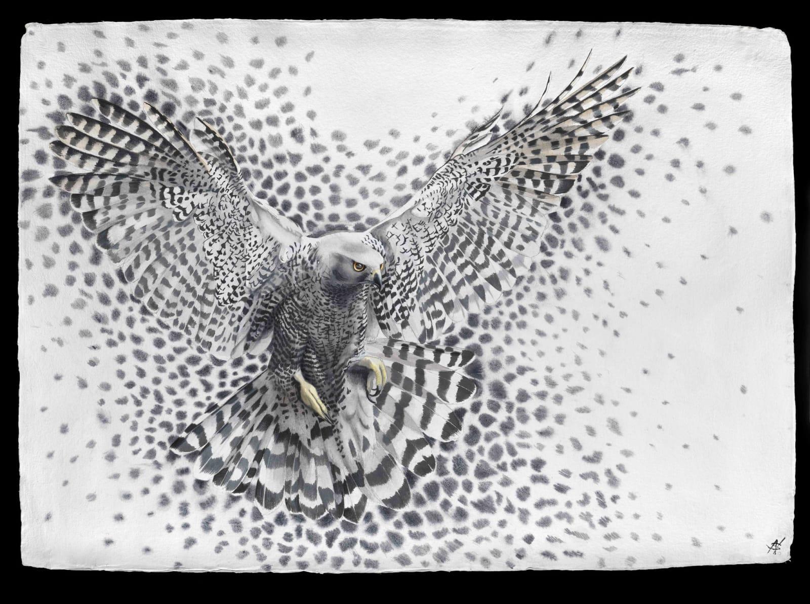 Molecule - Hawk, Watercolour, 37