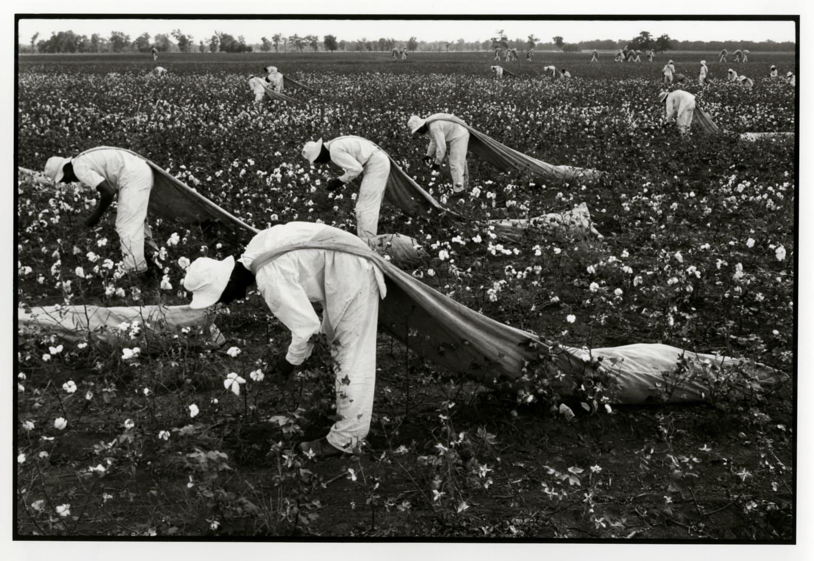 Danny Lyon - The Cotton Pickers, Ferguson Unit Texas Department Of Corrections, 1968