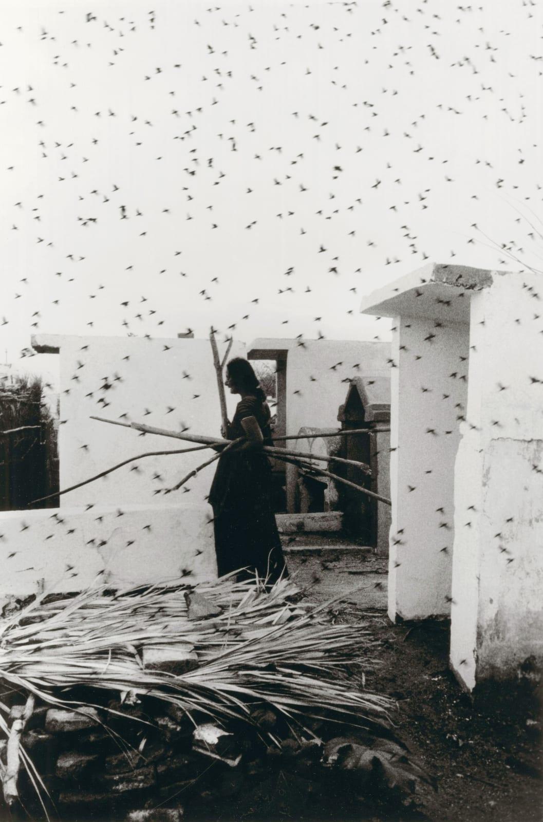 Graciela Iturbide - Cementerio, Juchitán, Oaxaca, 1988