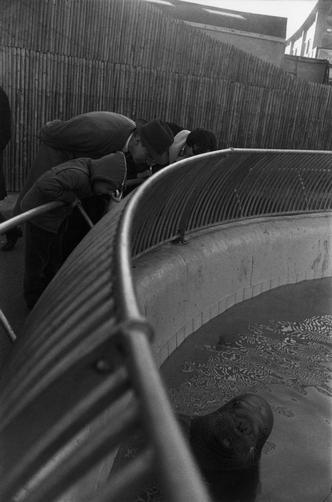 Garry Winogrand - The Zoo, New York City (walrus), 1963