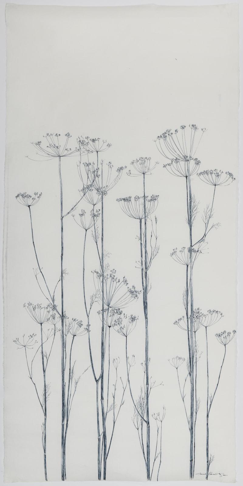 Sarah Horowitz, Seed Heads, 2021