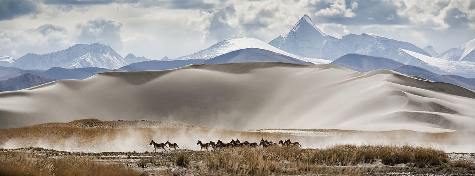 Matjaž Krivic, Pasu, Tibet, 2002 – 2006