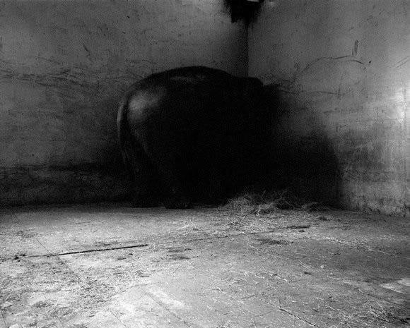 Tanja Verlak, Untitled #4, 2004-2006
