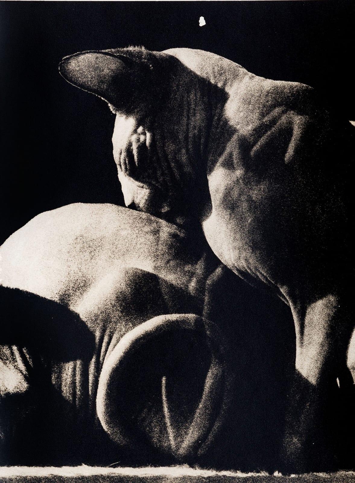 Andrej Lamut, Sphinx, 2018