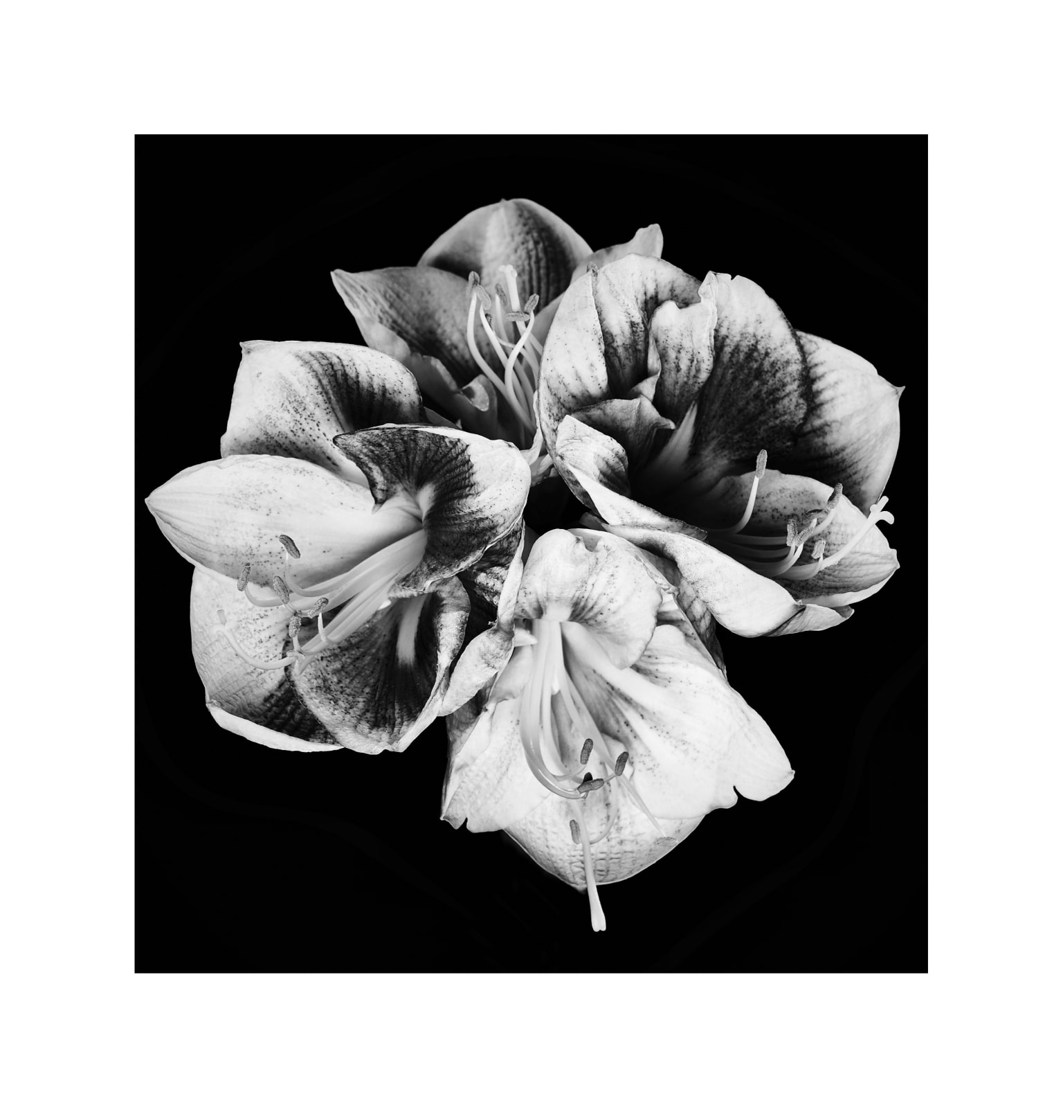 Almin Zrno, Flower 3, 2019