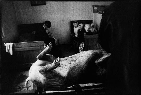 Stojan Kerbler, Pig Slaughter, 1977