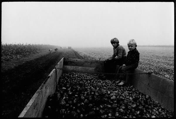 Stojan Kerbler, Potatoes , 1976