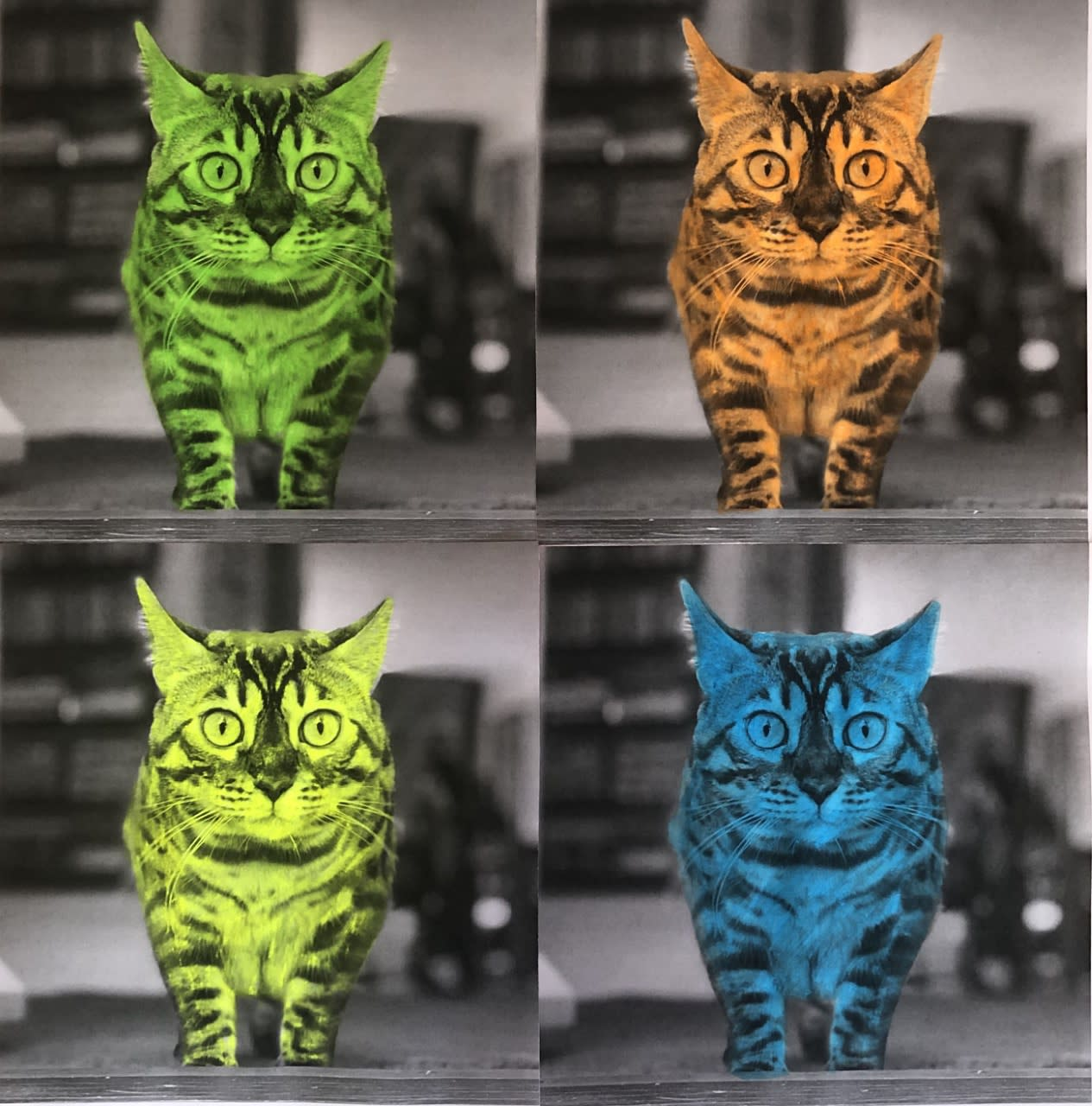 Flynn Wilson age 7. His creation of his cat inspired by Andy Warhol.