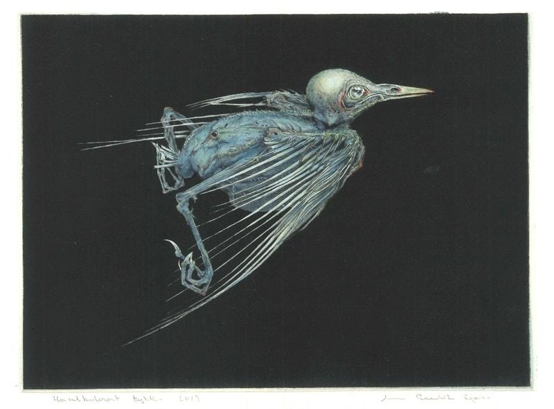 Arne Bendik Sjur, A Starling - Blue on Black Drypoint