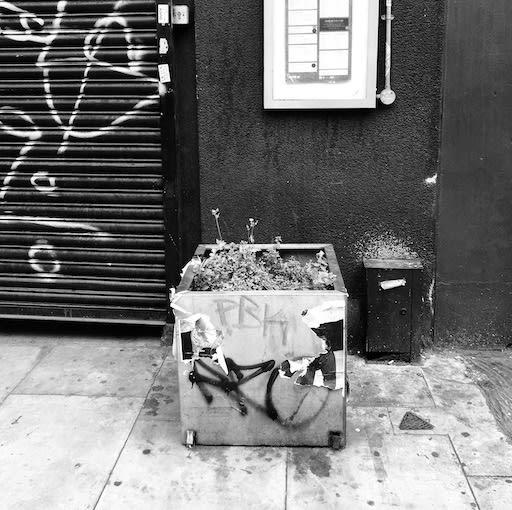 Wildflowers of London