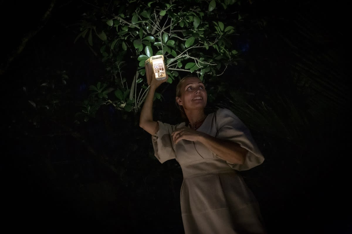 Another star of the night was the Karaka tree (corynocarpus laevigatus).
