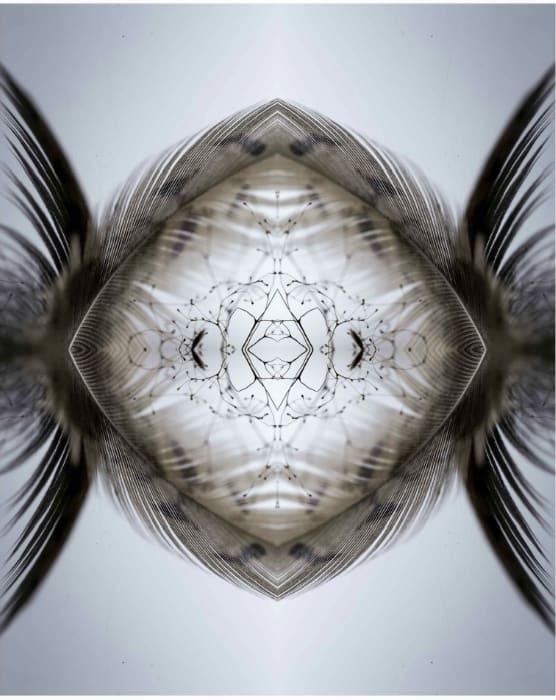 Aqualibrium