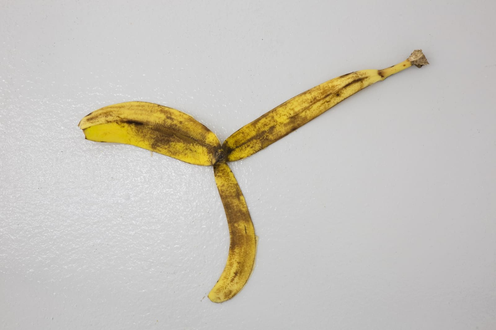 """Adriana Lara's Installation (Banana Peel), 2008, when it was shown at the """"Luluennial II,"""" curated by Andrew Berardini and Chris Sharp at Lulu in Mexico City, 2018.Courtesy Lulu"""