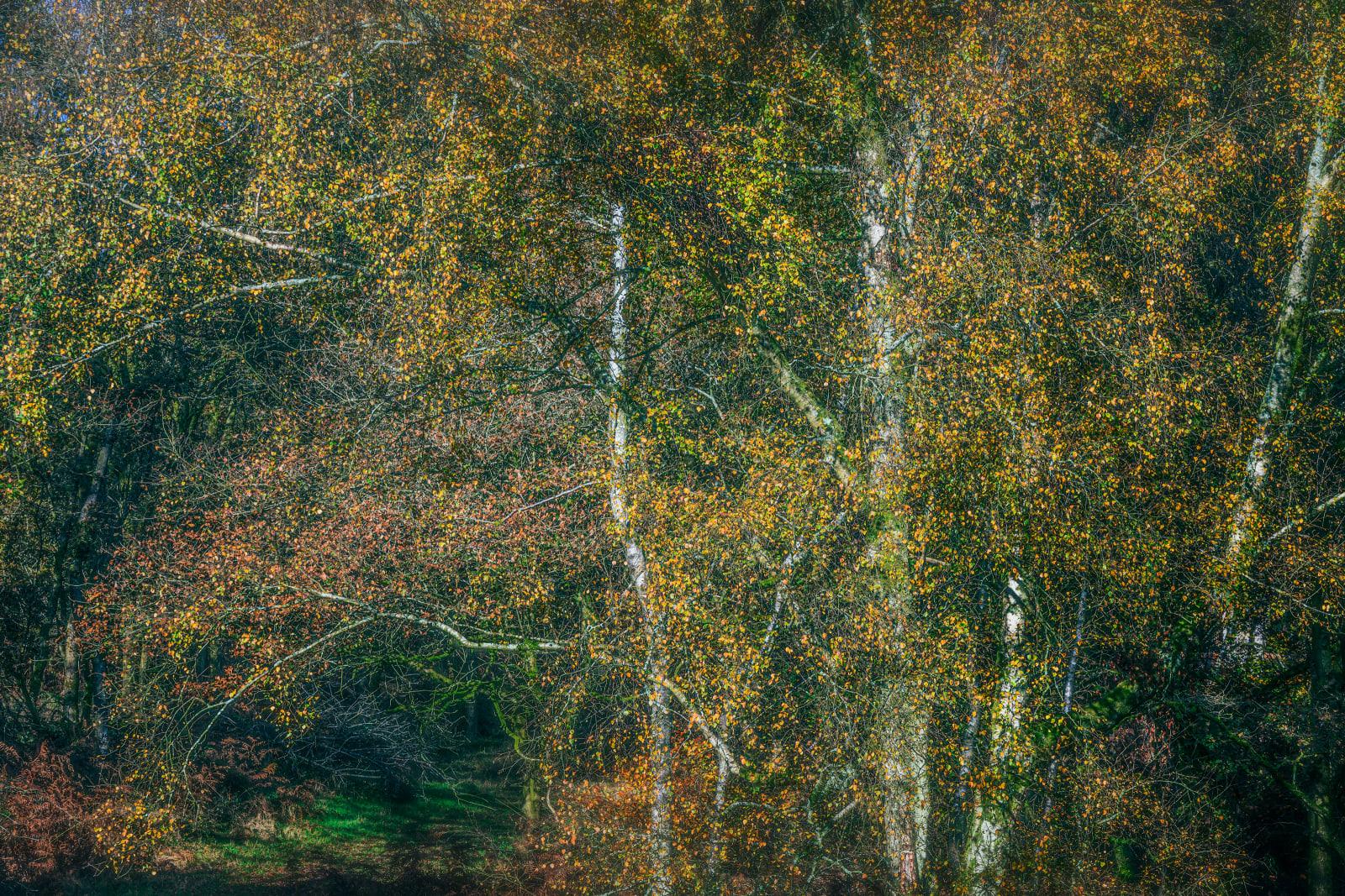 Autumn Colour Spatter