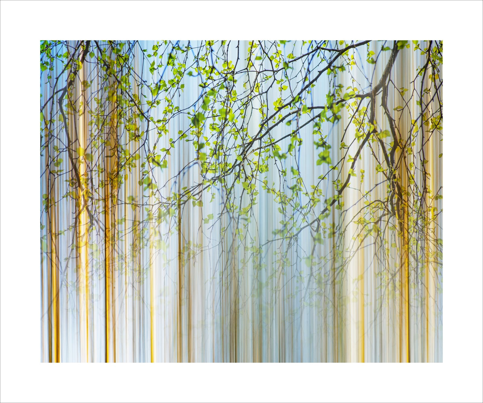 'VIRTUAL FOREST' artists proof for auction. This print is 12