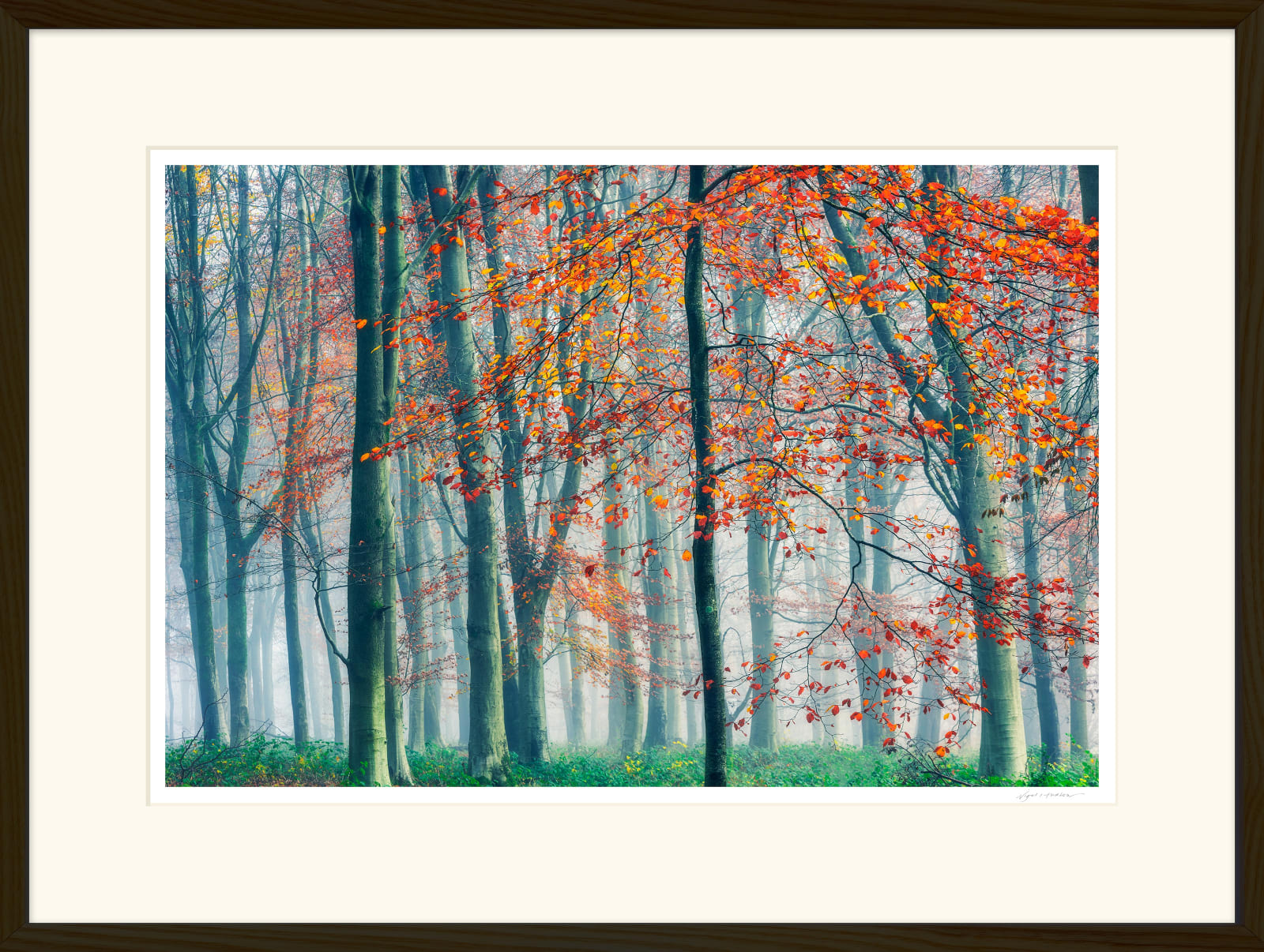 'BEAUTY AND THE BEECH' 16 x 24 inch print within a 22 x 30 inch Frame Printed on Platinum Etching Fine Art Archival Paper Matted and framed in a 2 cm oiled Walnut Cushion Frame under water white glass Signed and Editioned with a Certificate of Authenticity Available in three sizes ... Ready to Hang Prices from £295.00 Price includes delivery by DPD Courier to your front door