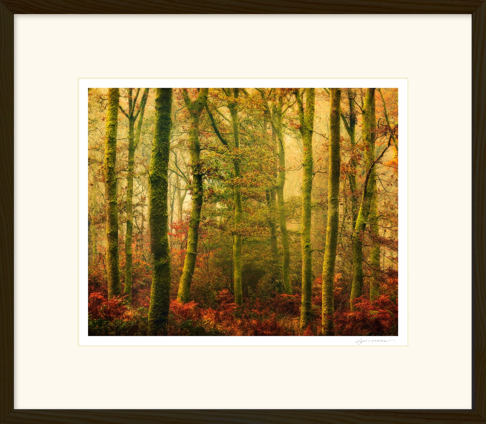 'CARPET OF GOLD' 16 x 20 inch print within a 22 x 26 inch Frame Printed on Platinum Etching Fine Art Archival Paper Matted and framed in a 2 cm oiled Walnut Cushion Frame under water white glass Signed and Editioned with a Certificate of Authenticity Available in three sizes ... Ready to Hang Prices from £275.00 Price includes delivery by DPD Courier to your front door
