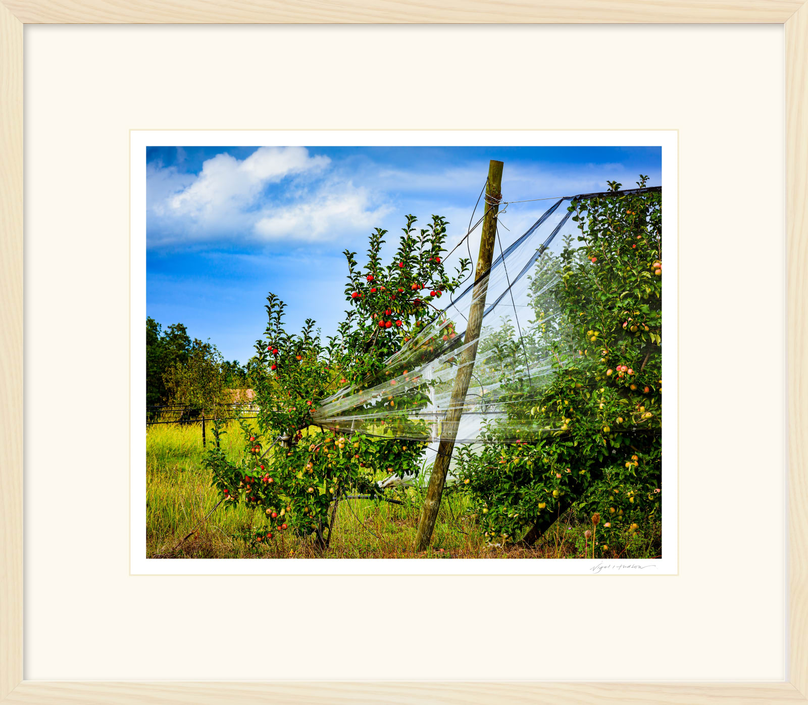 'LOT VALLEY HARVEST' Archival Pigment Print on Platinum Etching Fine Art Paper. Framed in an Limed Ash Cushion Frame and protected with crystal clear Water White Glass. Available in an edition of 3 in three sizes. Prices from £245.00 including first class courier delivery within five working days.