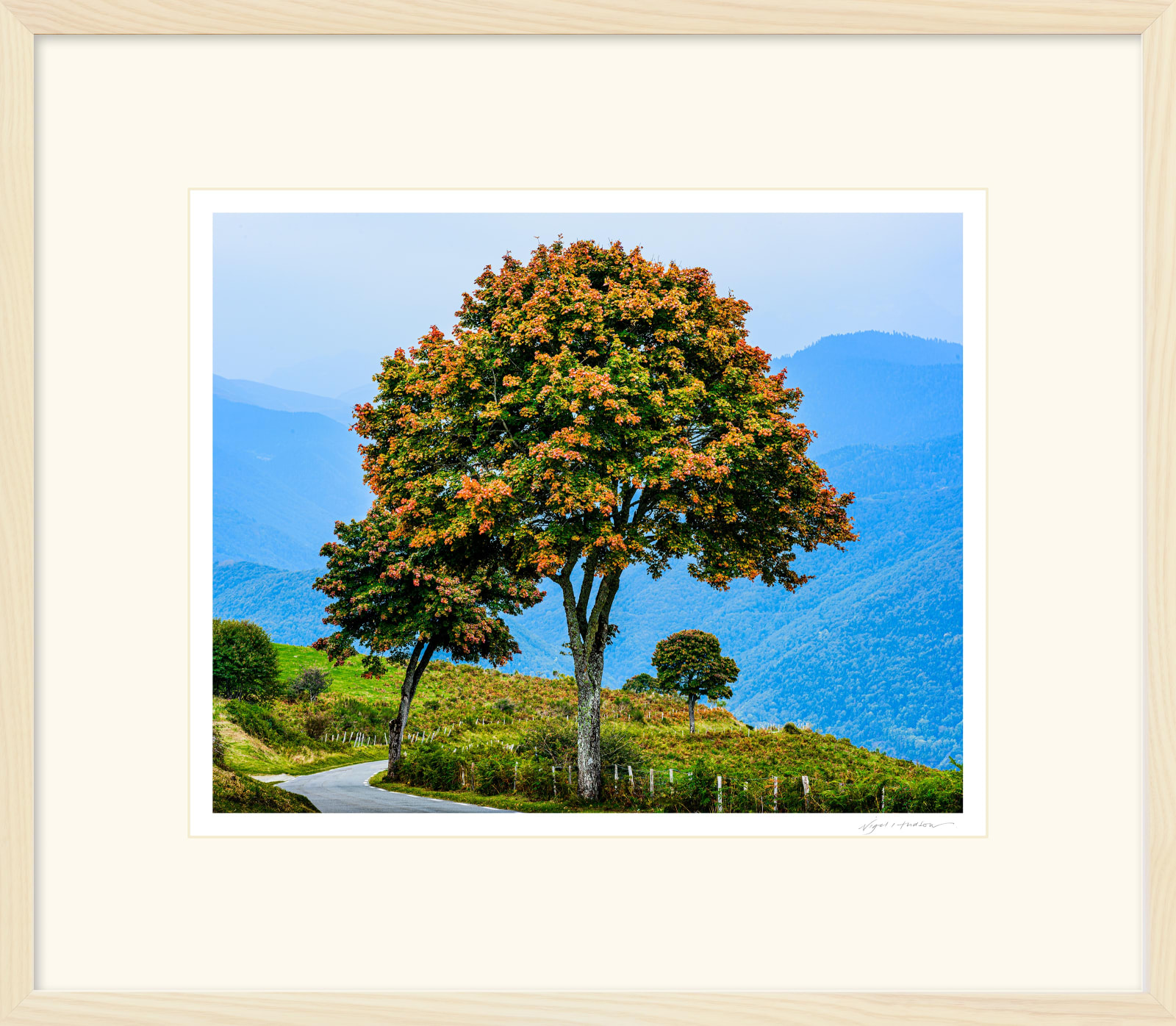 'THREE TREES' Archival Pigment Print on Platinum Etching Fine Art Paper. Framed in an Limed Ash Cushion Frame and protected with crystal clear Water White Glass. Available in an edition of 3 in three sizes. Prices from £245.00 including first class courier delivery within five working days.