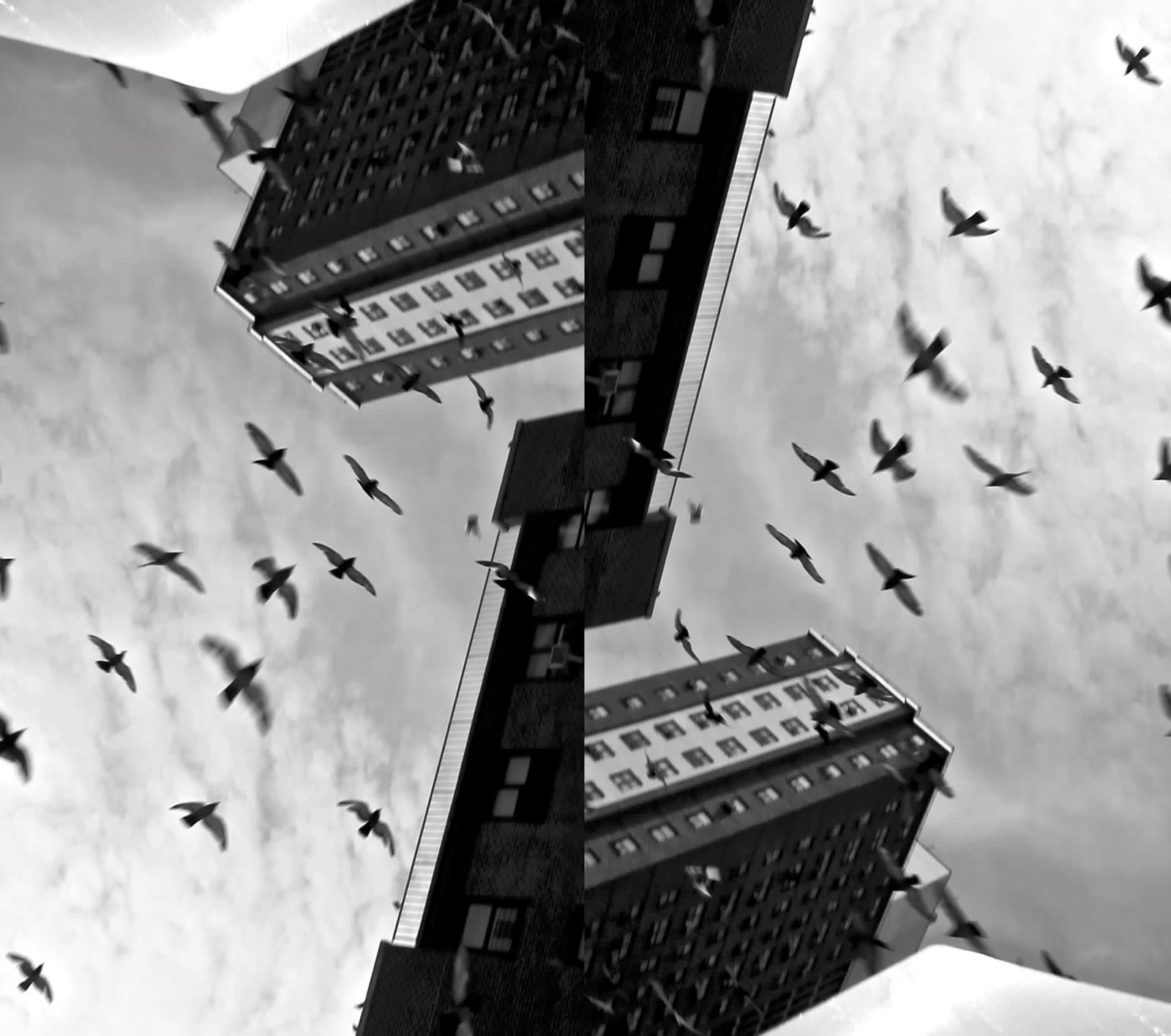 birds in New York signed, dated and certified Archival inkjet print frame: 46 x 53 in / (116.8 x 134.6 cm) Edition of 10 + 2 AP (0107)