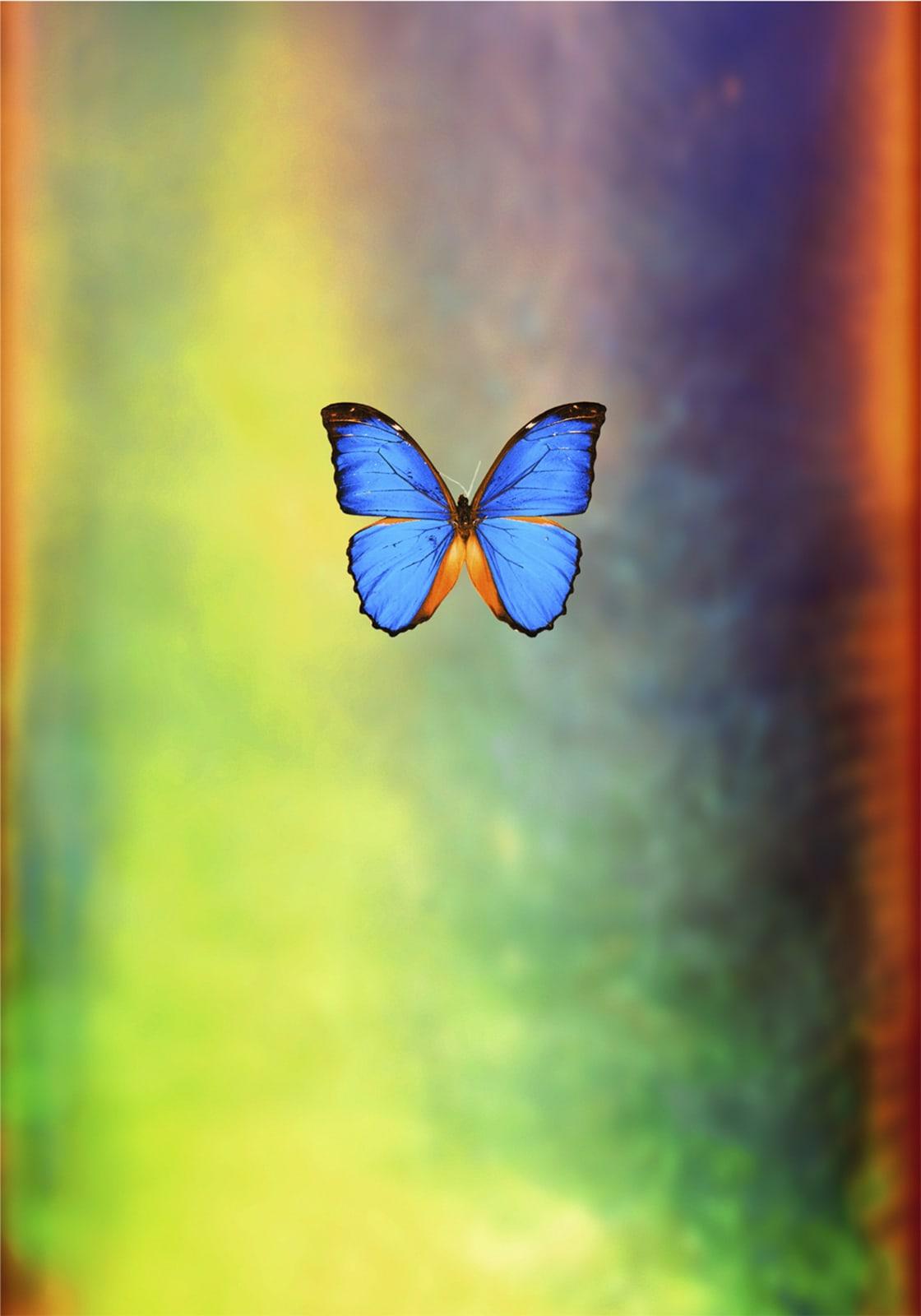 Pamela Davis Kivelson, #55 Opal Butterfly, 2010