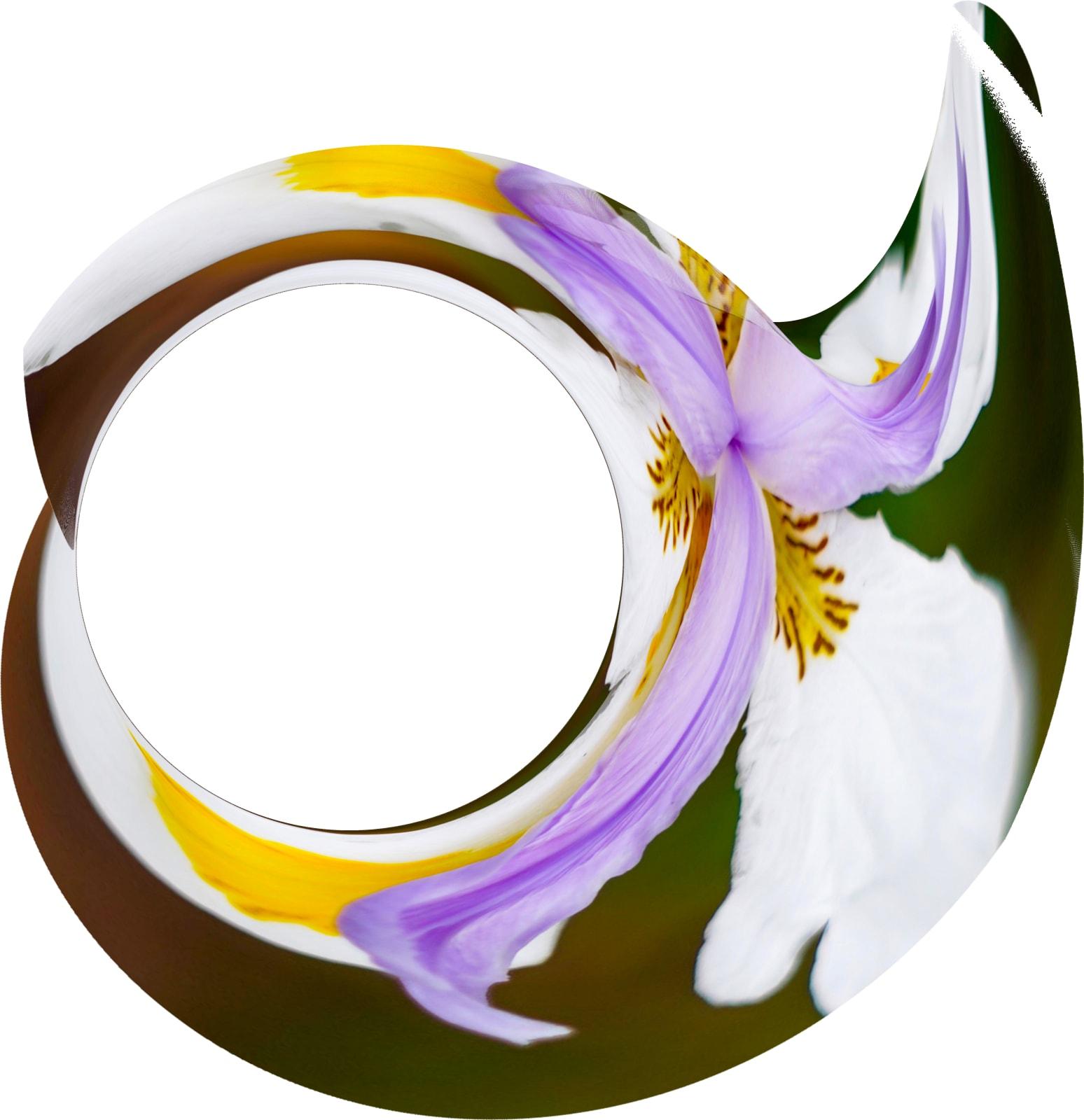 Flower Spiral, 2021
