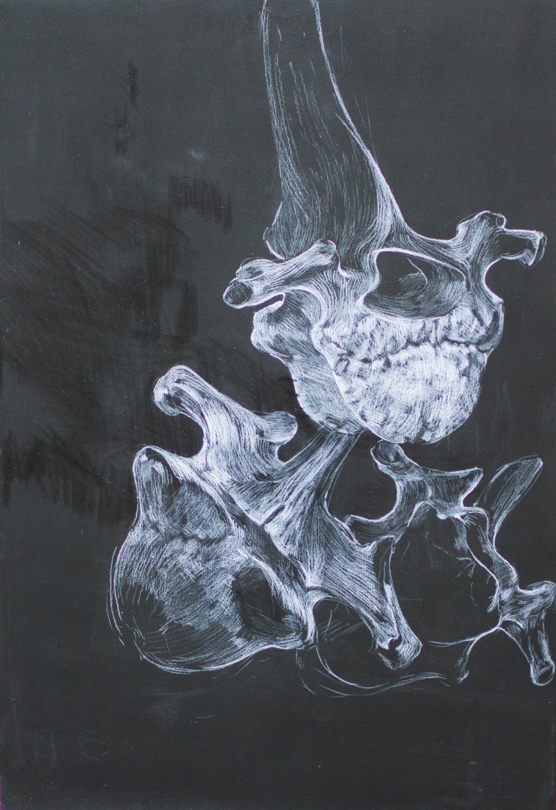 Bone Study I 2021 Chinagraph on Blackboard 73.5 x 50 cm