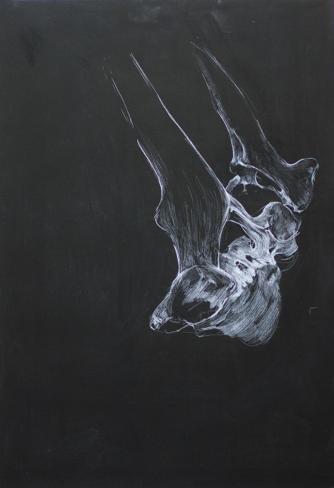 Bone Study II 2021 Chinagraph on Blackboard 73.5 x 50 cm