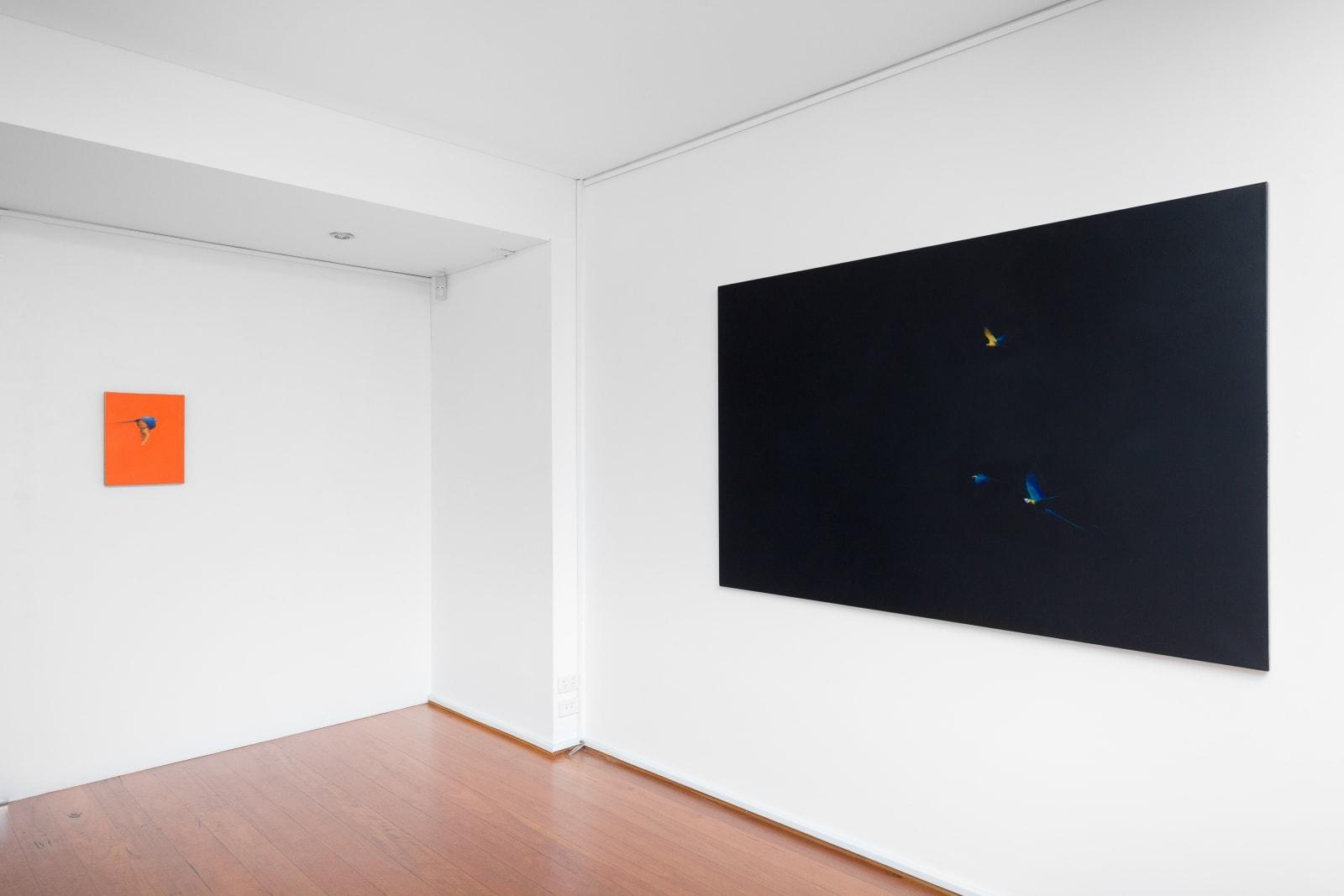 install shot: Matthew Kentmann Blue & Gold