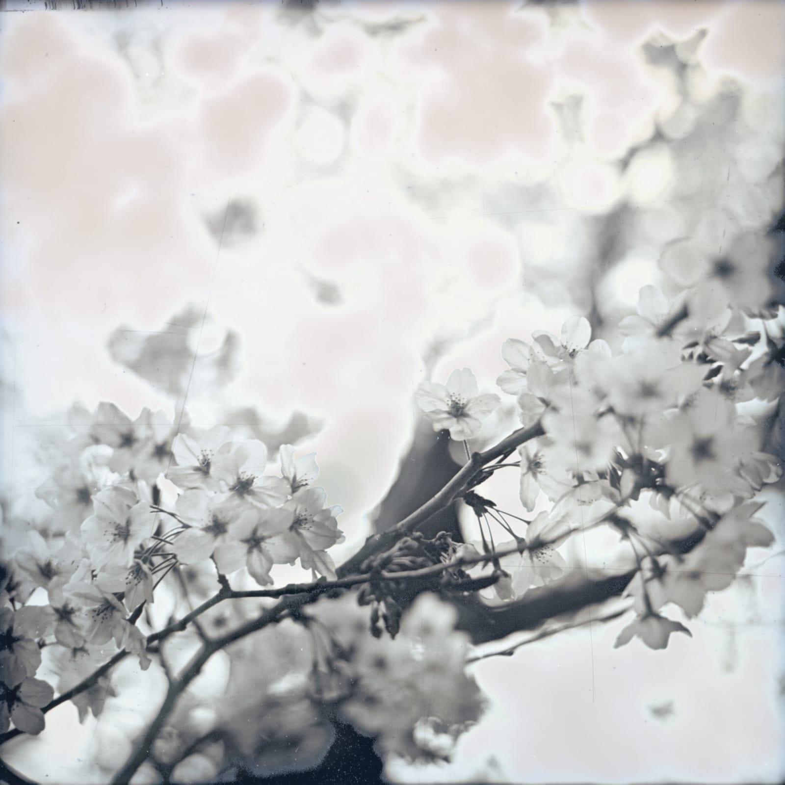 Takashi Arai, Sakura Bandobashi, March 28, 2019