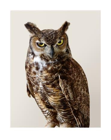 Leila Jeffreys, 'Forrest' Great Horned Owl, 2015