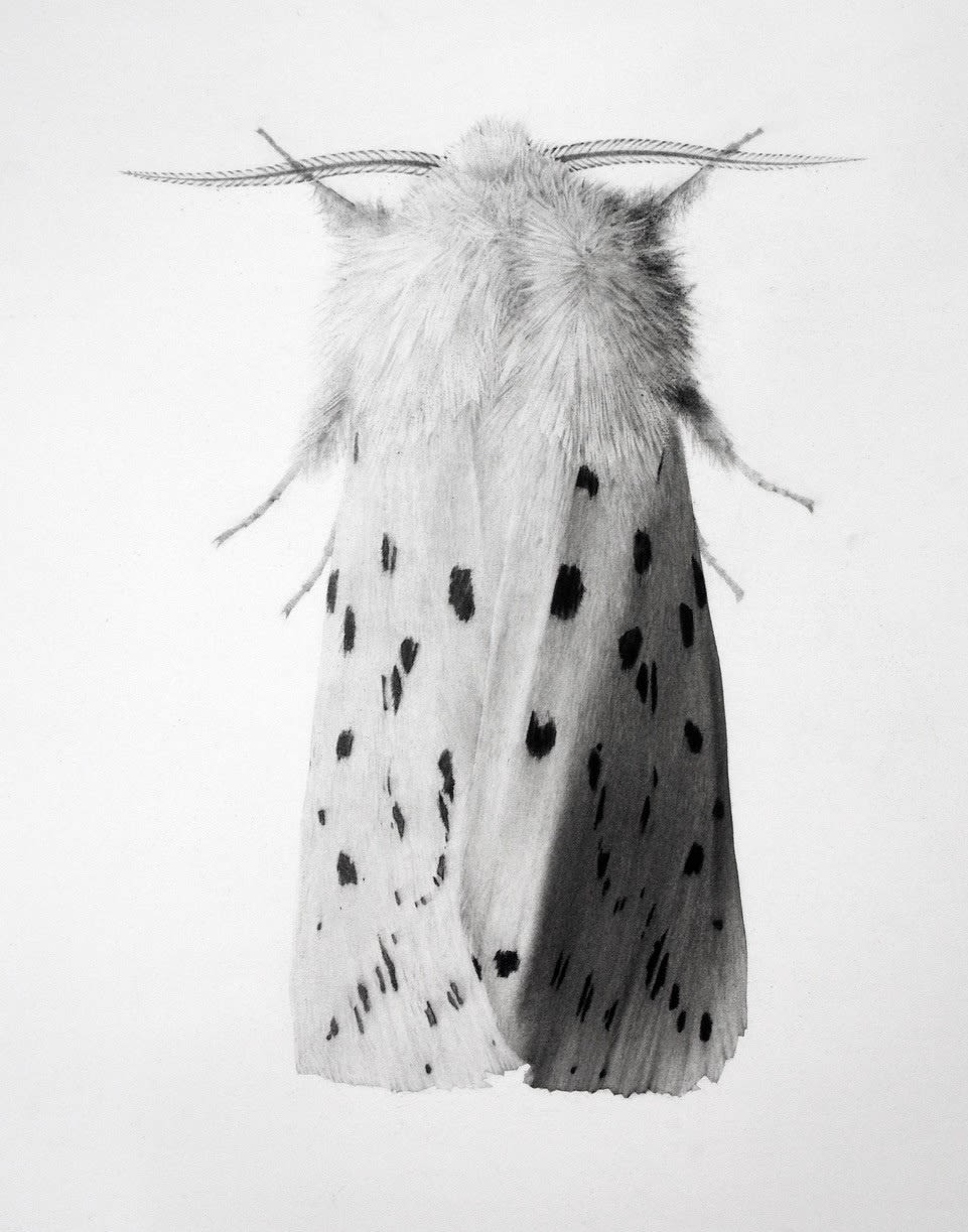 London Art Fair 2018 17 - 21 January Business Design Centre, London N1 OQH (Jonathan Delafield Cook, Ermine Moth II)