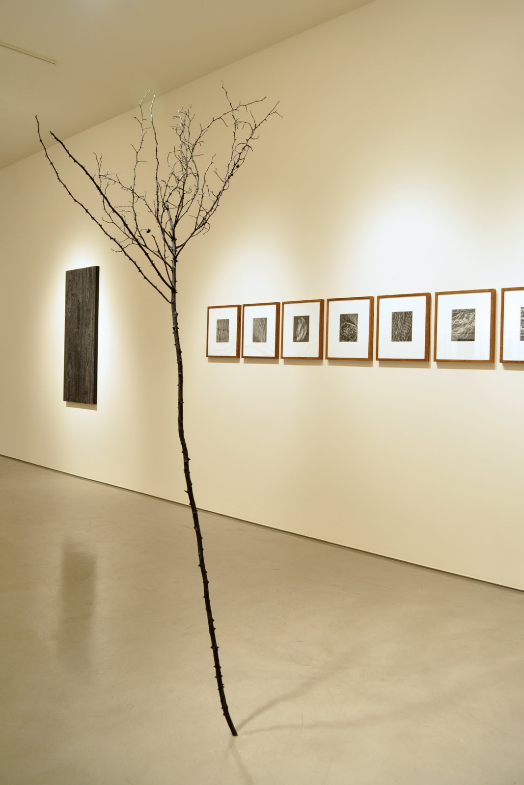 DISSECTING NATURE | Group Exhibition