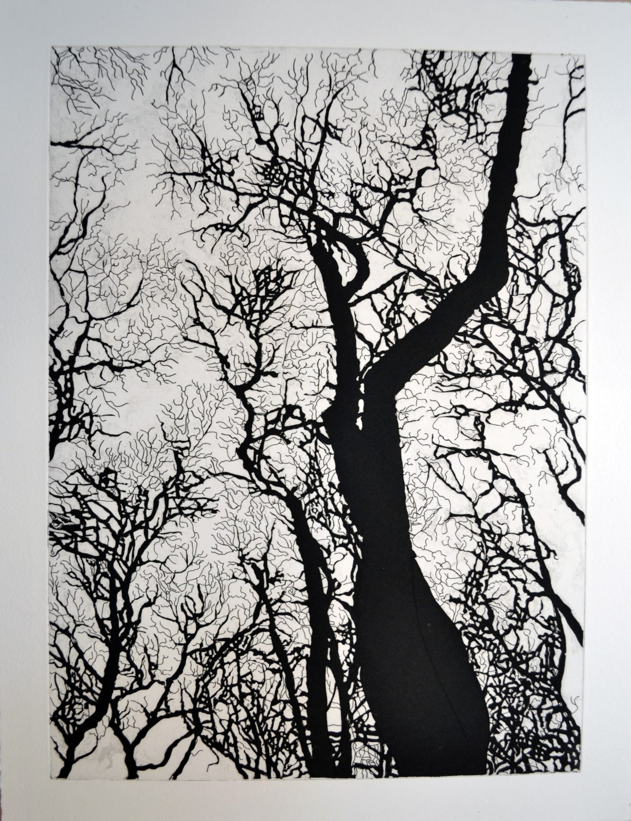 Nate Cassie Untitled (Bryant Park, NY) State III, Four American Trees Series, 2017