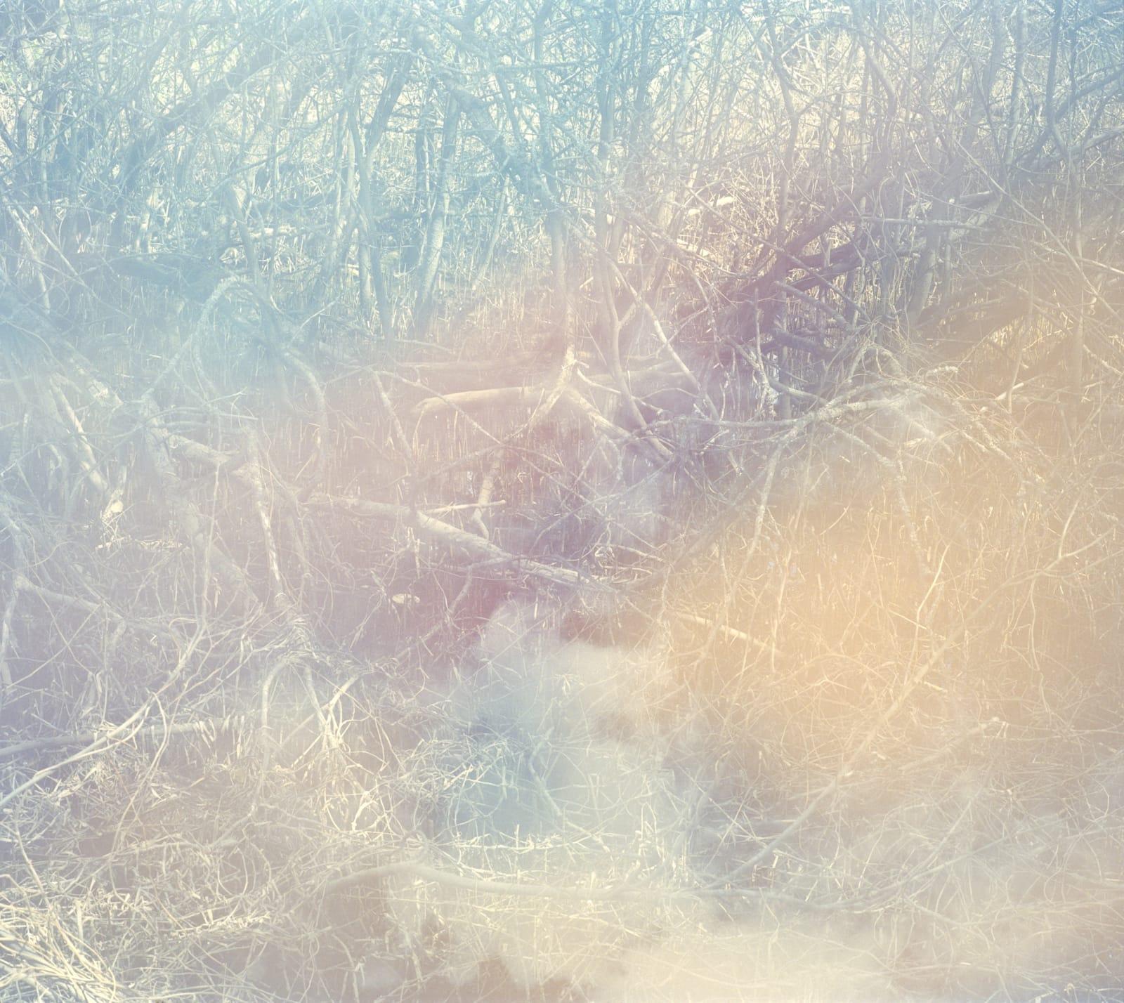 Erle M. Kyllingmark YDASSA #09, 2020 Analoge C-Print Image size: 94 x 105,5 cm Framed size: 97 x 108,5 cm Edition of 5 plus 2 artist's proofs