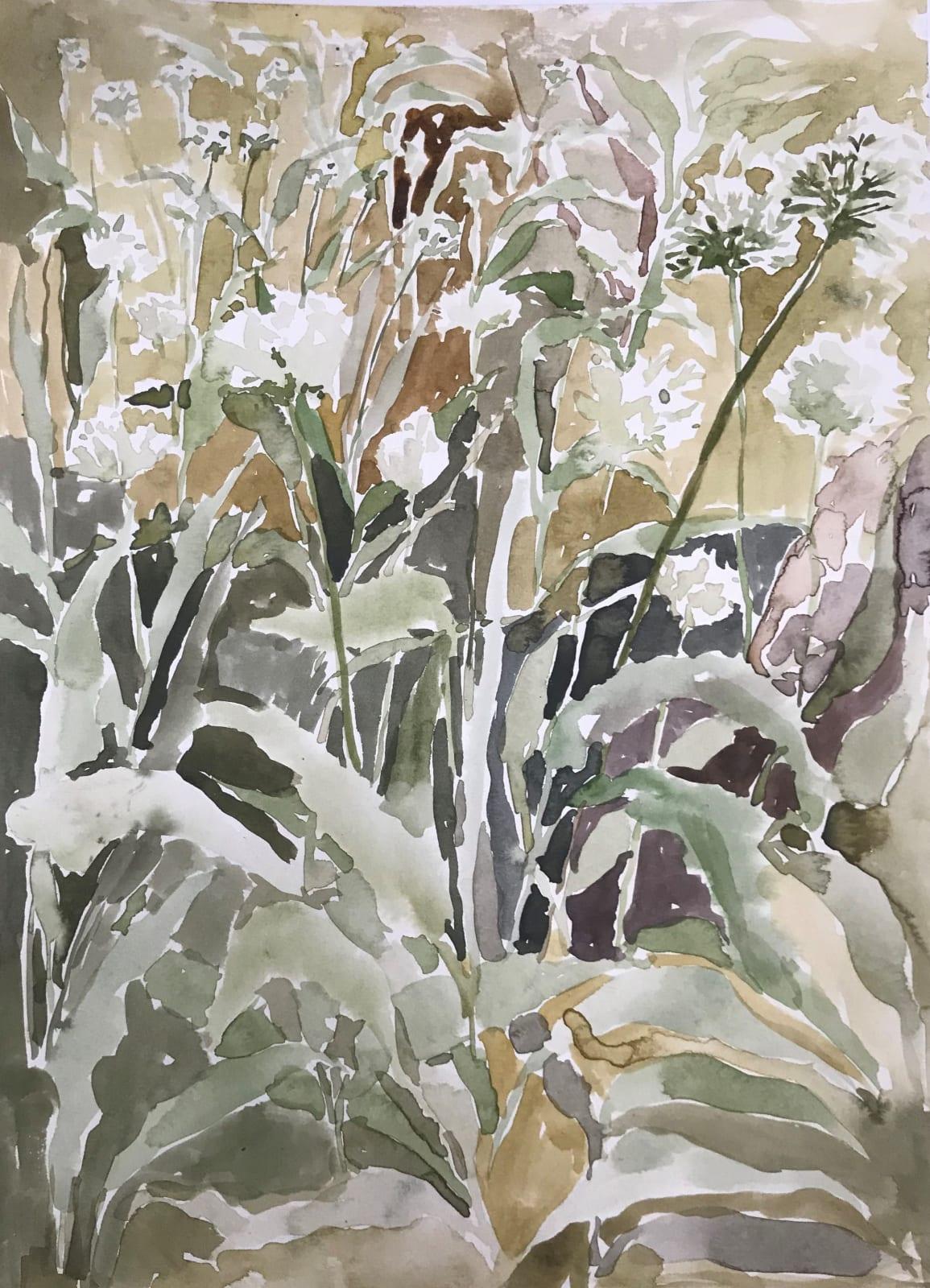 Beatrice Hasell McCosh, Wild Garlic Study