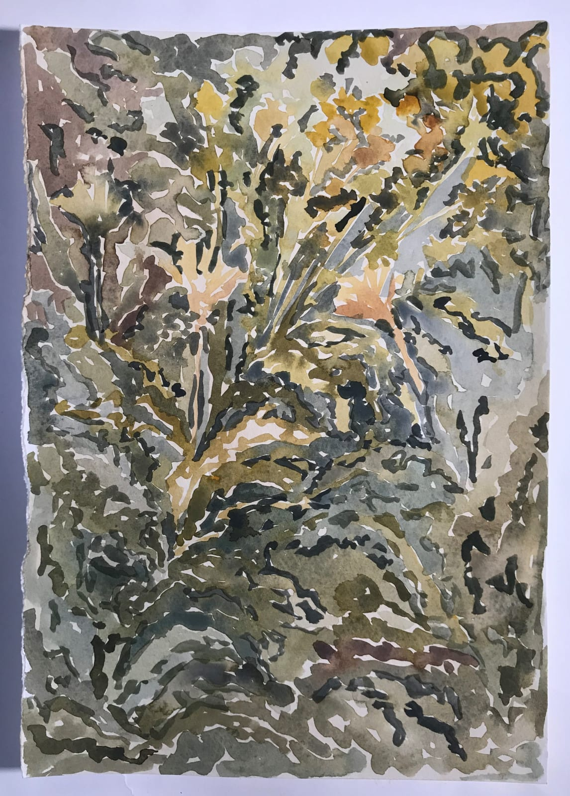 Beatrice Hasell-McCosh, River Bank Wildflower study