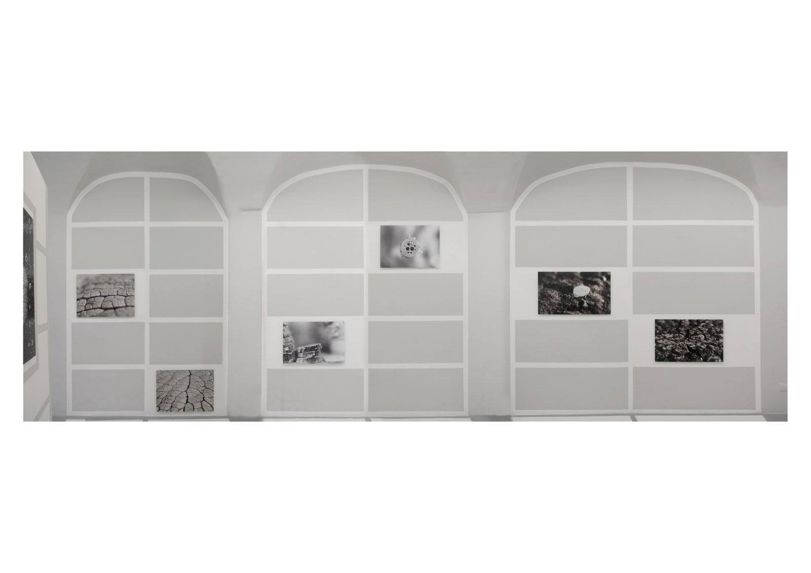 Michele Guido, z2o Garden Project, installation view at z2o Sara Zanin Gallery