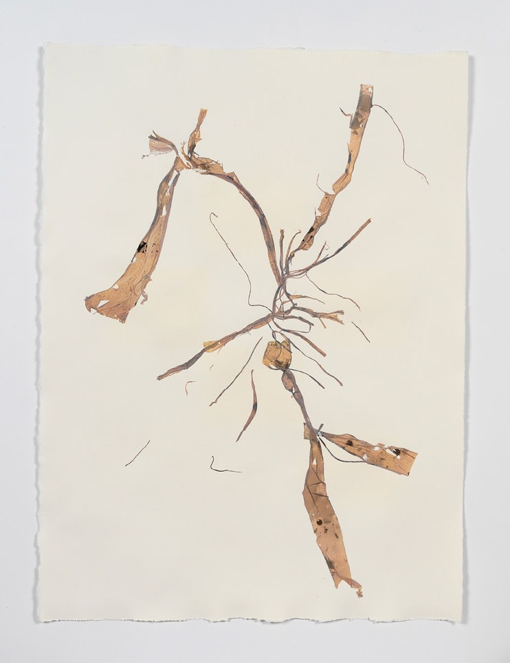 Beatrice Pediconi Anamnesis #4, 2018 Mixed media on watercolor paper Cm 66 x 50, cm 75 x 59 x 4 framed
