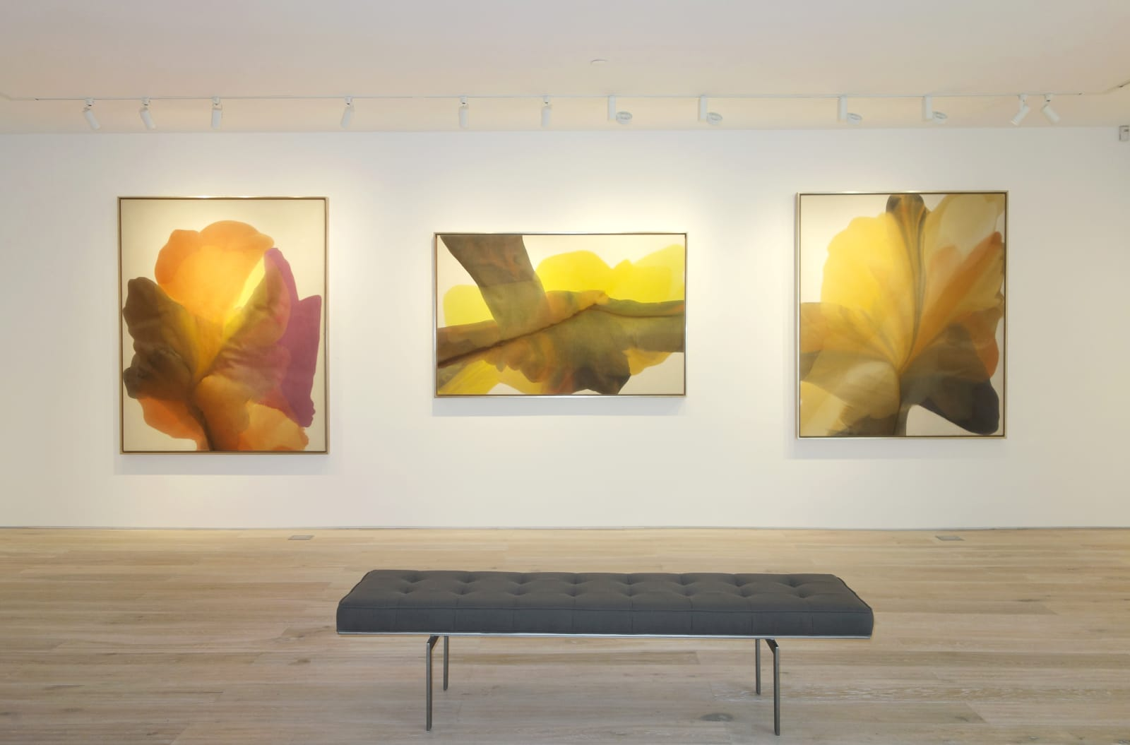 Installation view: Irene Monat Stern